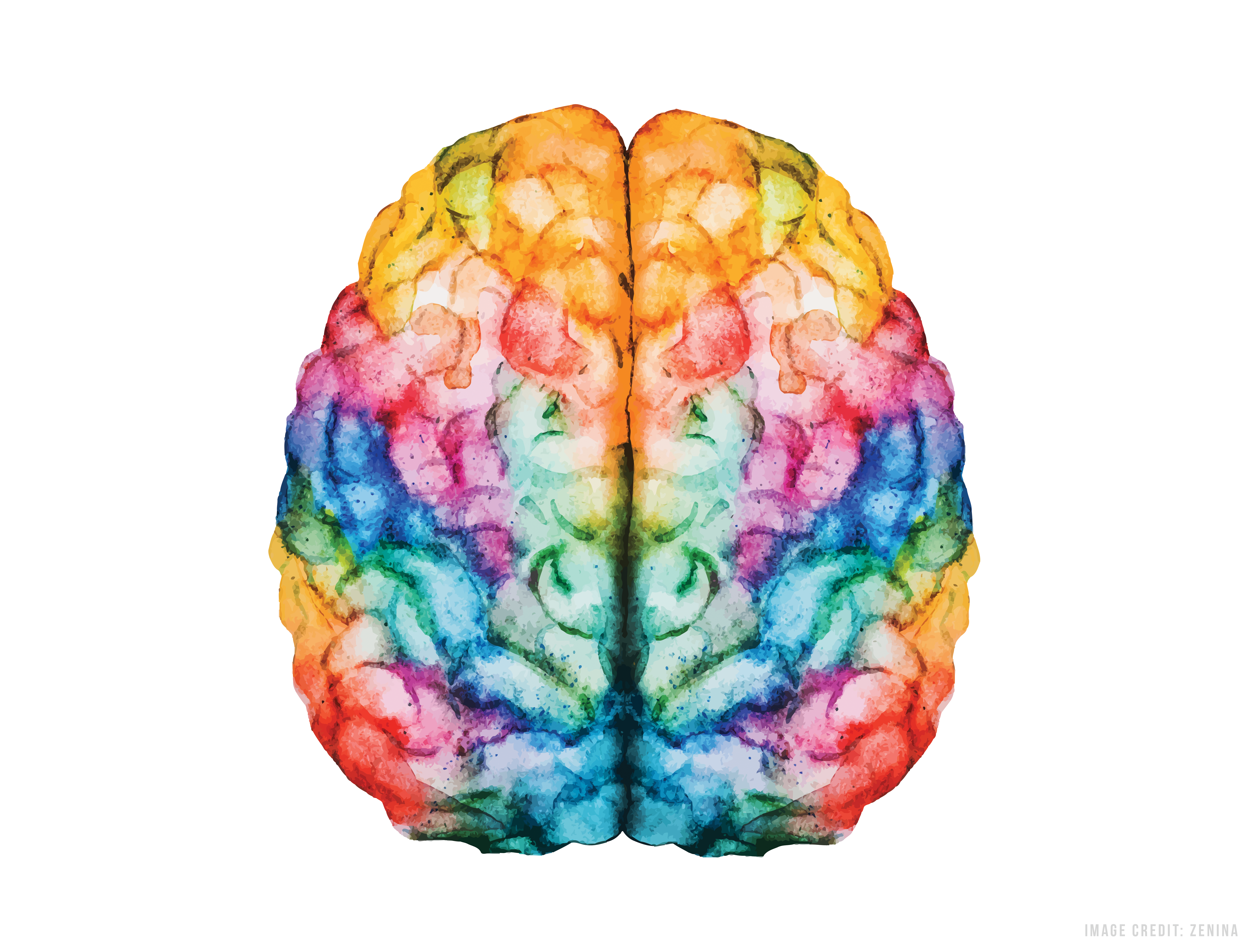 gaining steam where art and science meetlearning and the brain vector png brain vector free download