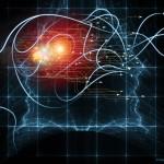 adult neurogenesis
