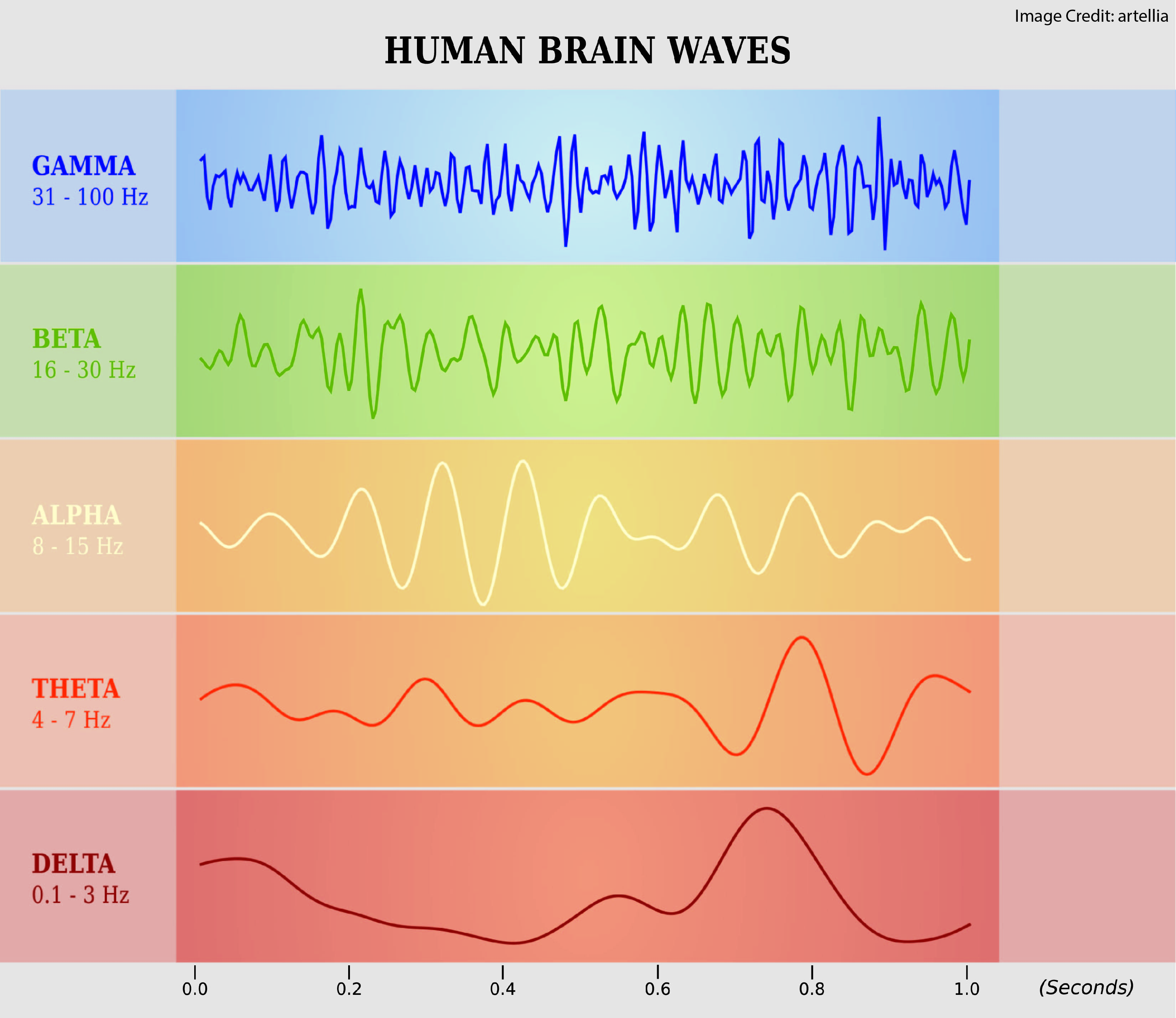 understanding brain waves
