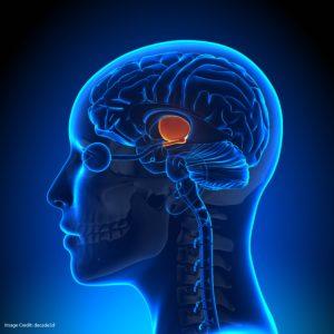 seductive allure of neuroscience